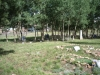 graves_near_aspens