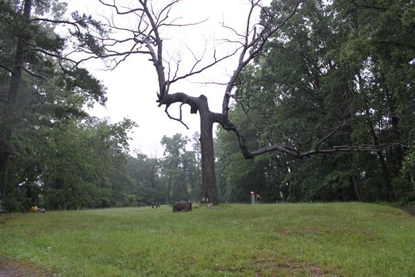 Price Chapel Cemetery (Cemetary) Tree