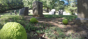 Osage Orange Trees in Cemeteries
