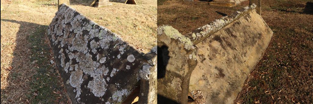 Comb Grave Lichen